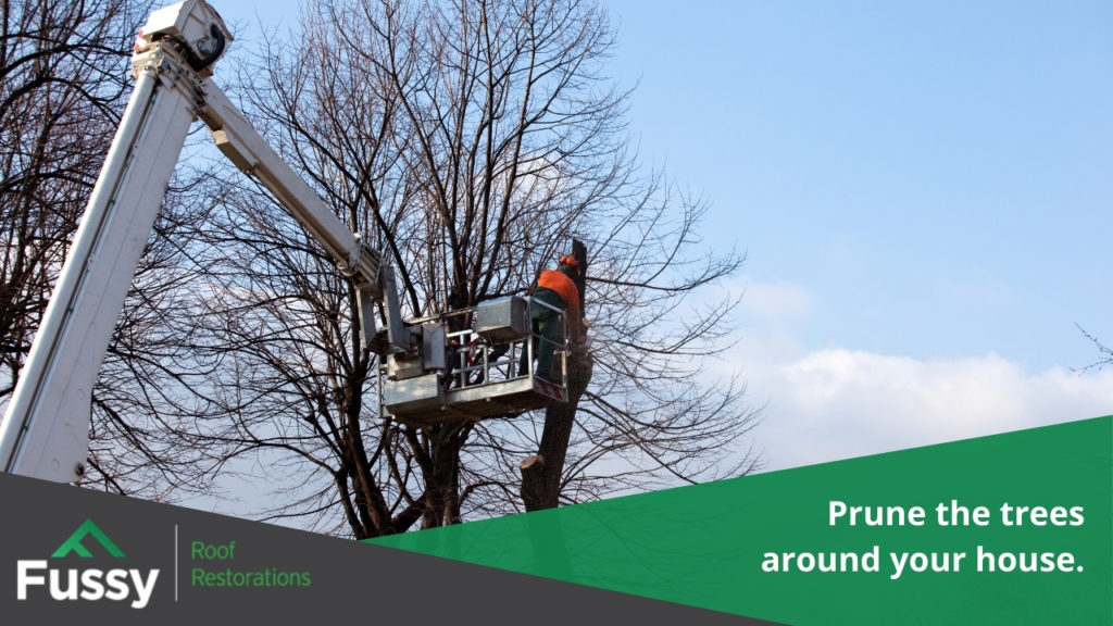 Prune the trees around your house.